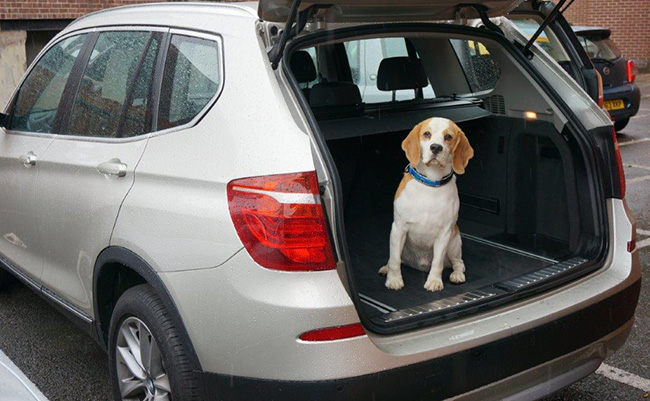 The BMW X3 Adorable Beagle not included