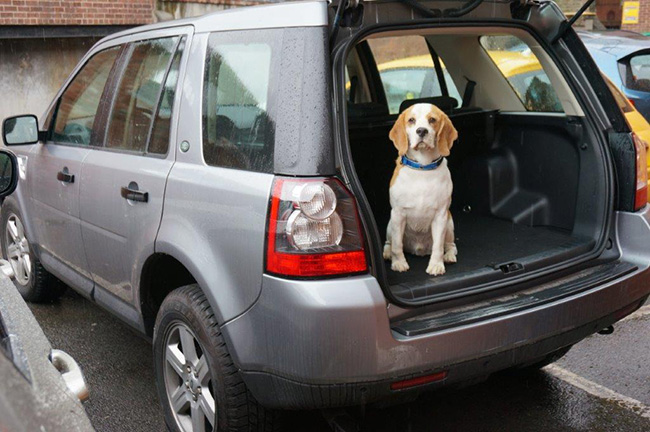 Ted in the Land Rover Freelander